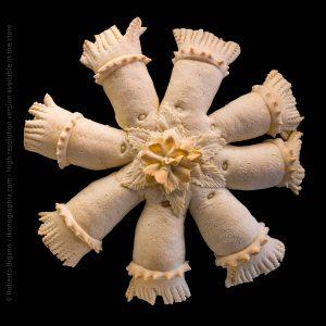 Pane è coja, Bread of the spouses. Ussassai, Nuoro, Sardinia